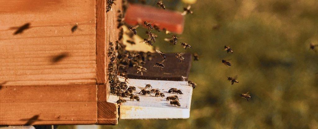 Glückliche Bienen, Natürliche Hautpflege, Feste Handcreme Flossen-Fett mit Bienenwachs